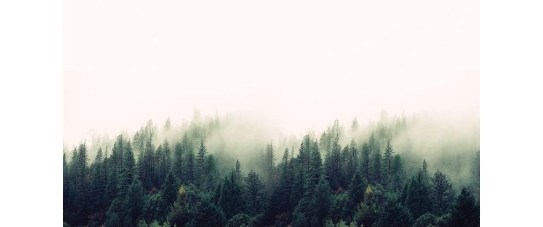 Ormancılıkta ilk hedef, ağaç servetini ve endüstriyel ağaçlandırmayı artırmak