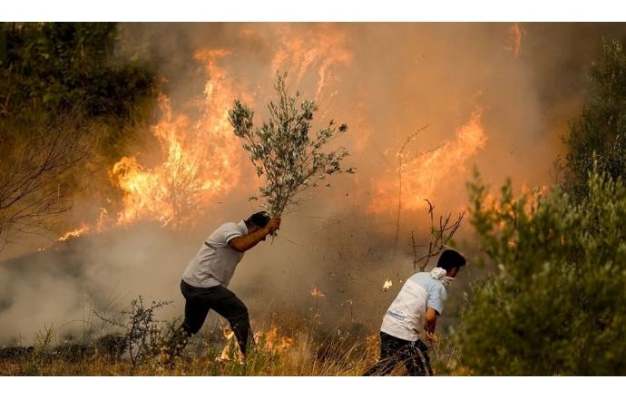 Orman Yangınları için Fidan Bağışı Kampanyası
